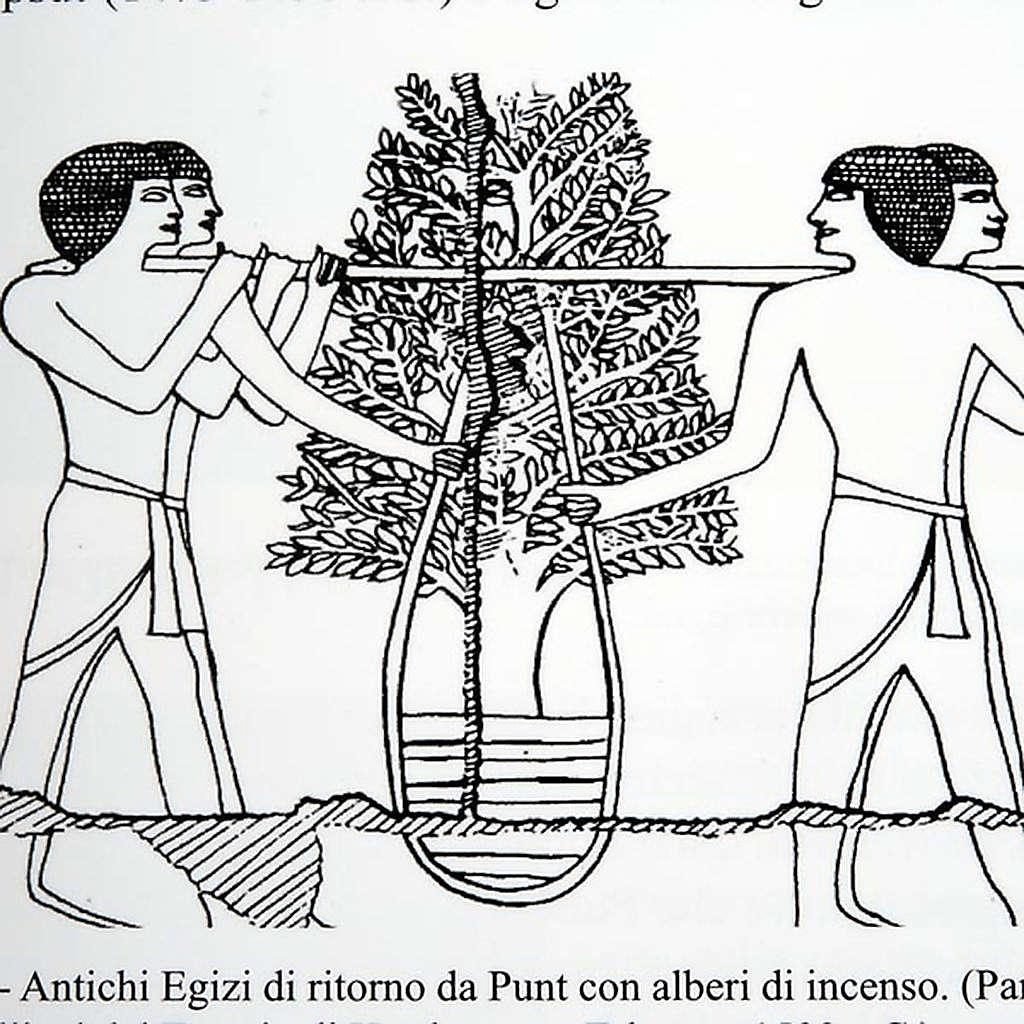 El incienso entre el mito y la realidad (Idioma Italiano) 4