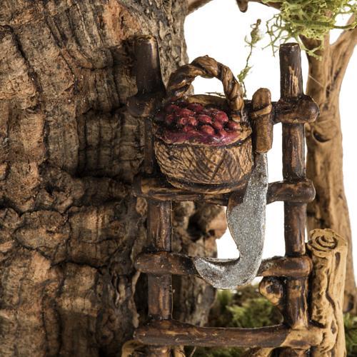 Ambientación pesebre fruta y escalera 4