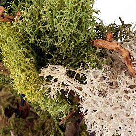 Set alberelli con licheni presepe fai da te s4