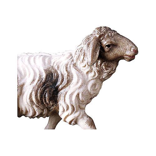 Pecora macchiata che corre presepe Original legno dipinto Valgardena 12 cm 2