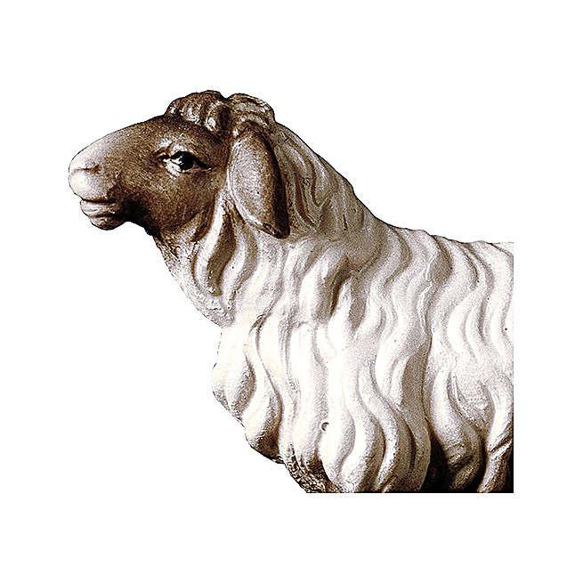 Pecora che guarda avanti con testa scura presepe Original legno Valgardena 10 cm 4