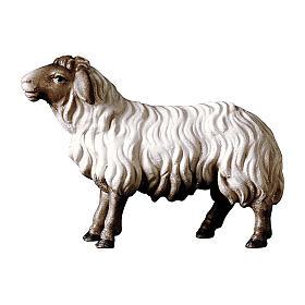 Pecora che guarda avanti con testa scura presepe Original legno Valgardena 10 cm s1