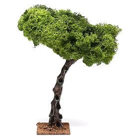 Muschio, licheni, piante, pavimentazioni: Quercia per presepe cm 25