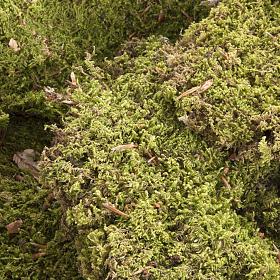 Mousse végétale pour crèche 500 gr s2