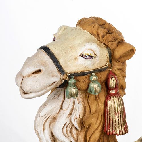Wielbłąd szopka Fontanini 65 cm żywica 2