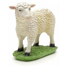 Nativity figurine, sheep in resin 24cm s3