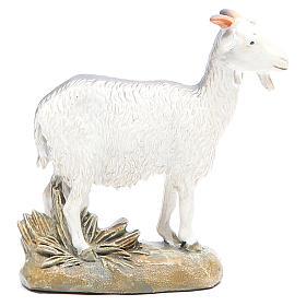Chèvre 16 cm gamme Martino Landi s2