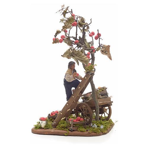 Neapolitan Nativity scene, apple picking, 10 cm 2
