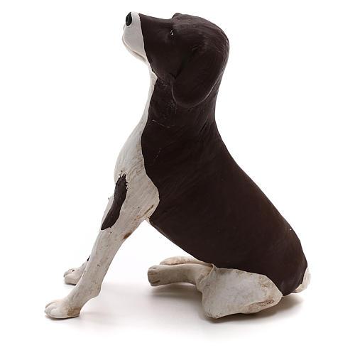 Perro sentado 24 cm terracota belén Nápoles 5