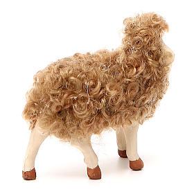 Pecora in piedi con lana 24 cm presepe Napoli s3