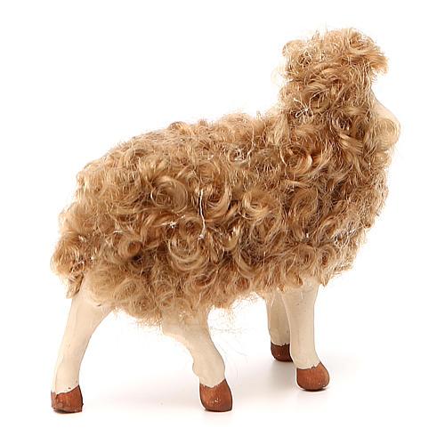 Pecora in piedi con lana 24 cm presepe Napoli 3