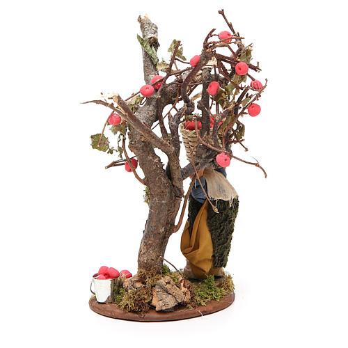Uomo cesto di mele e albero 10 cm presepe Napoli 3