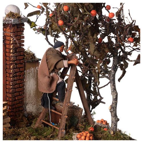 Orange picking animated scene, Neapolitan Nativity 12cm 2