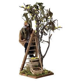 Man on ladder with tree, animated Neapolitan Nativity figurine 14cm s3