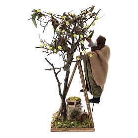 Man on ladder with tree, animated Neapolitan Nativity figurine 14cm s5