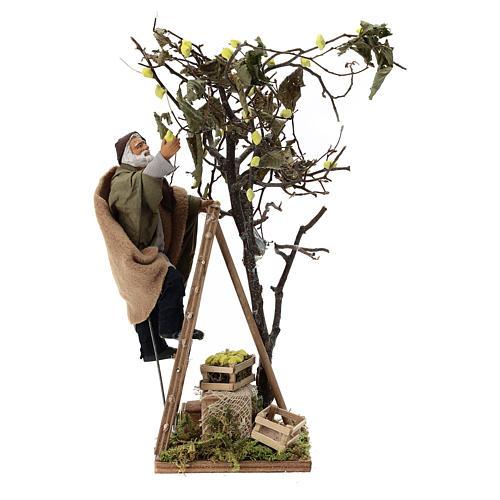 Man on ladder with tree, animated Neapolitan Nativity figurine 14cm 1