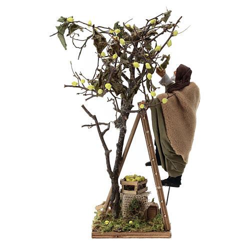 Man on ladder with tree, animated Neapolitan Nativity figurine 14cm 5