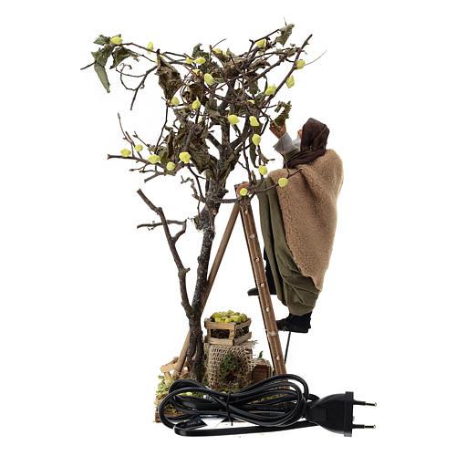 Man on ladder with tree, animated Neapolitan Nativity figurine 14cm 6