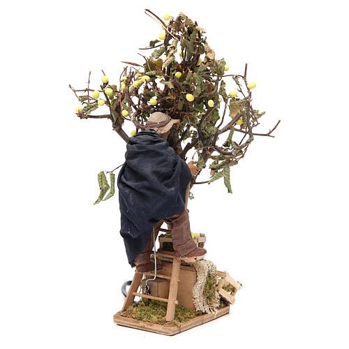 Uomo su scala con albero 14 cm movimento presepe Napoli 3
