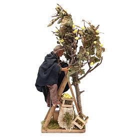 Man on ladder with tree, animated Neapolitan Nativity figurine 14cm s1