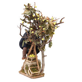 Man on ladder with tree, animated Neapolitan Nativity figurine 14cm s2