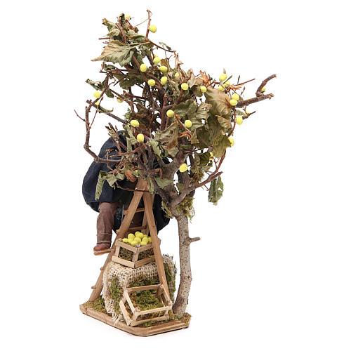 Man on ladder with tree, animated Neapolitan Nativity figurine 14cm 2