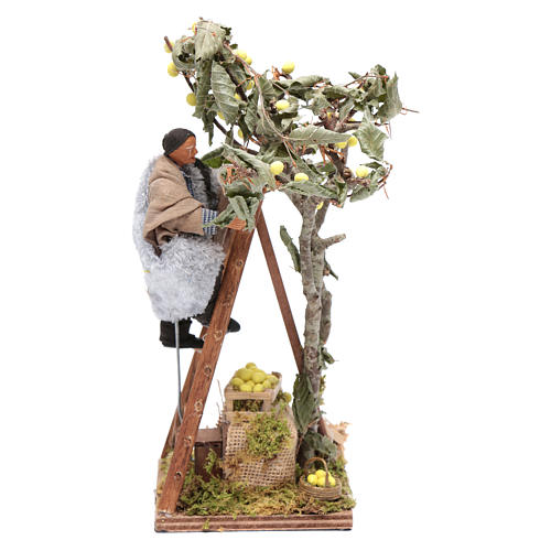 Moving man with ladder leaning on tree 12 cm Neapolitan nativity scene 1
