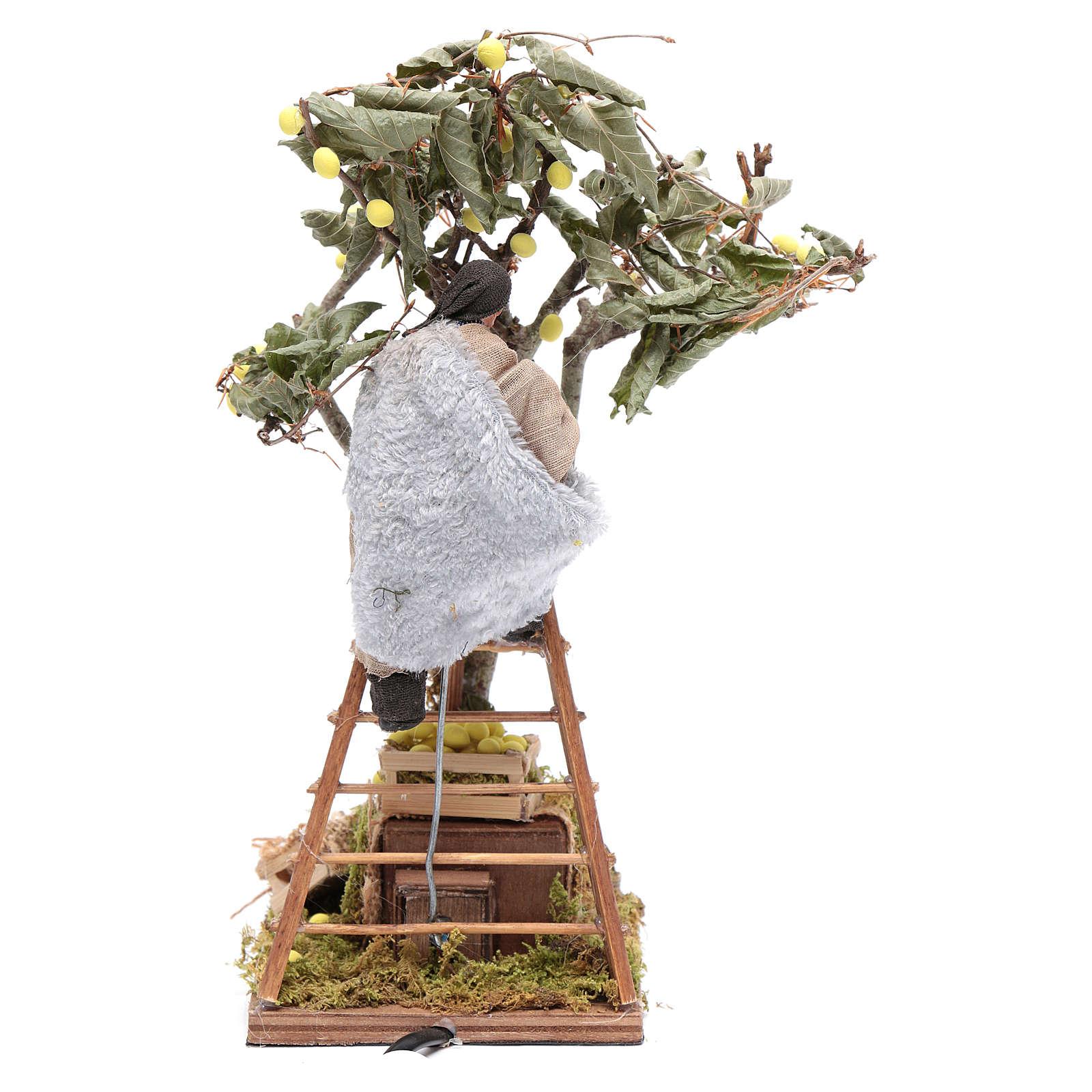 Uomo con scala sull'albero 12 cm con movimento presepe Napoli 4