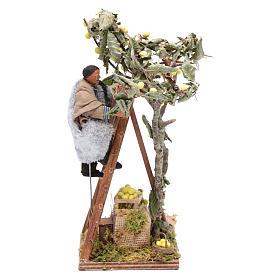 Uomo con scala sull'albero 12 cm con movimento presepe Napoli s1