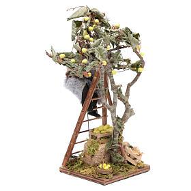 Uomo con scala sull'albero 12 cm con movimento presepe Napoli s2