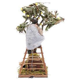 Uomo con scala sull'albero 12 cm con movimento presepe Napoli s4