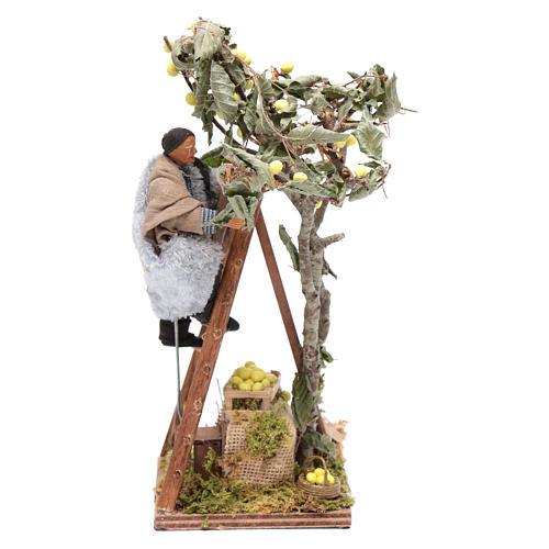 Uomo con scala sull'albero 12 cm con movimento presepe Napoli 1