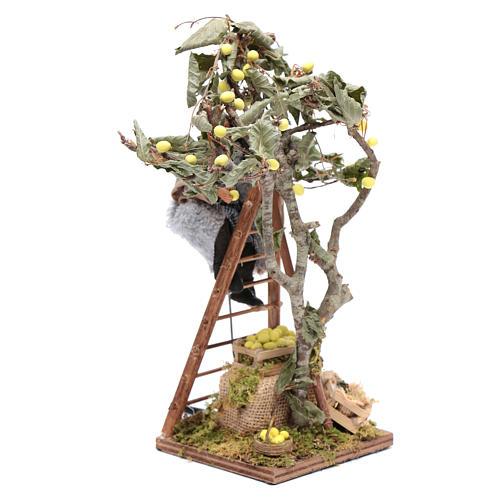 Uomo con scala sull'albero 12 cm con movimento presepe Napoli 2