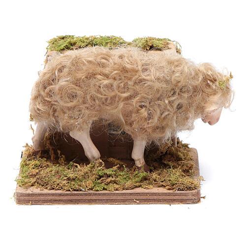Moving sheep 24 cm for Neapolitan nativity scene 1