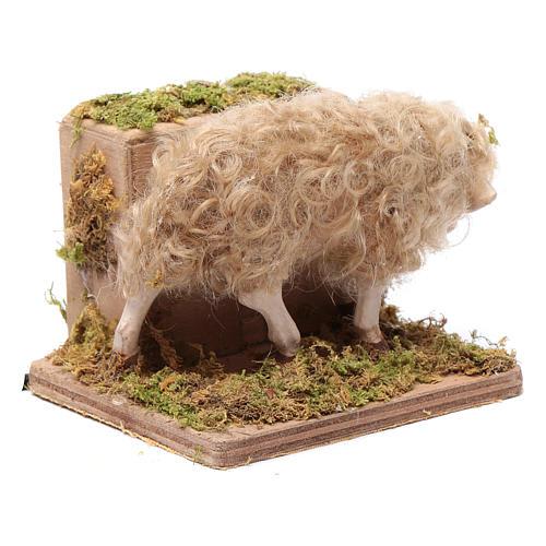 Pecorella in movimento presepe 24 cm di Napoli 3