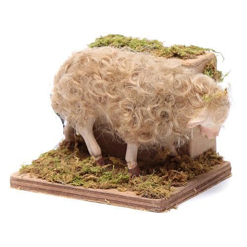 Moving sheep 24 cm for Neapolitan nativity scene 2