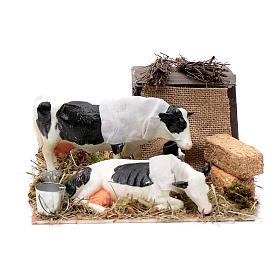 Mucche in movimento balle di paglia presepe di Napoli 12 cm s1