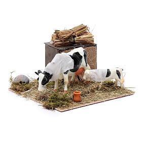 Mucca in movimento con cucciolo presepe di Napoli 12 cm s3