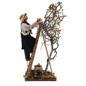 Neapolitan nativity scene man with tree and ladder in movement 24 cm s6