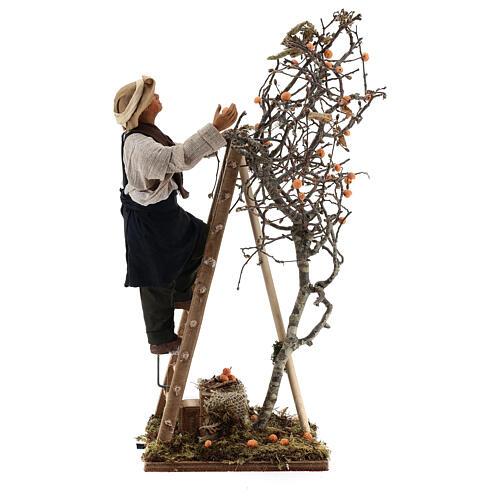 Hombre escalera con árbol movimiento 24 cm belén napolitano 6