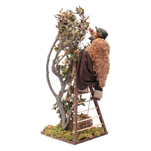 Uomo scala con albero movimento 24 cm presepe napoletano 1