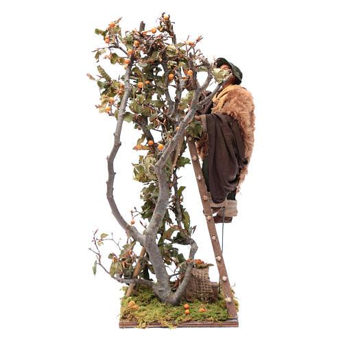 Uomo scala con albero movimento 24 cm presepe napoletano 2