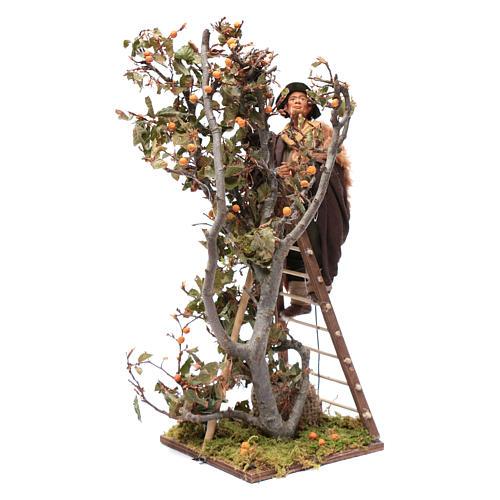 Uomo scala con albero movimento 24 cm presepe napoletano 3