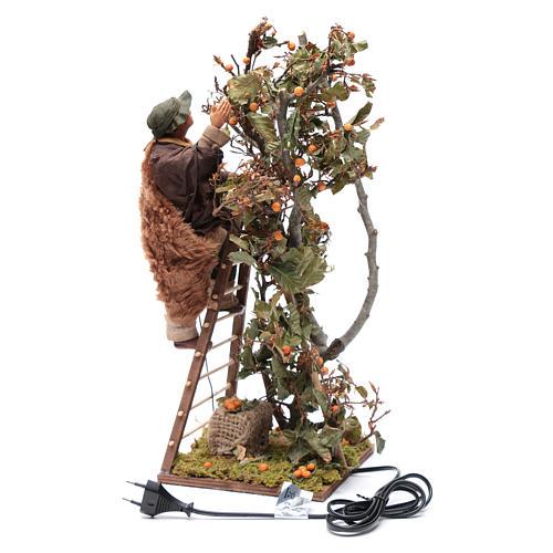 Uomo scala con albero movimento 24 cm presepe napoletano 4