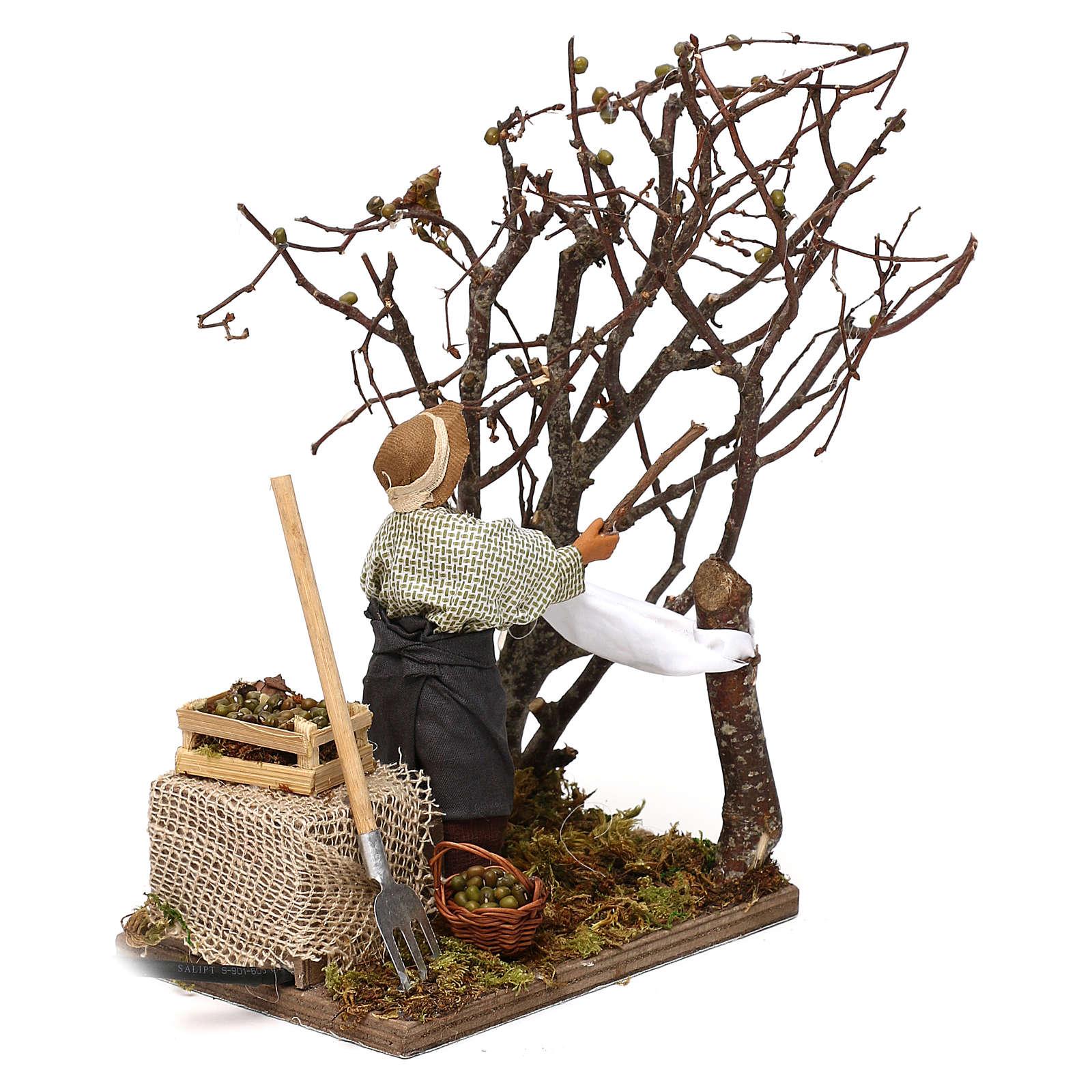 Uomo che raccoglie olive in movimento per presepe napoletano di 12 cm 4