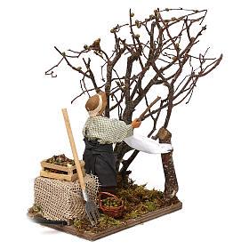 Uomo che raccoglie olive in movimento per presepe napoletano di 12 cm s2