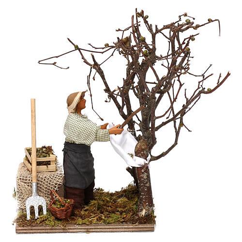Uomo che raccoglie olive in movimento per presepe napoletano di 12 cm 1