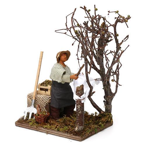 Uomo che raccoglie olive in movimento per presepe napoletano di 12 cm 3