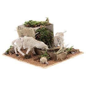 Pecore mangiano il fieno movimento presepe Napoli di 6 cm s3