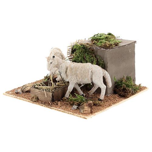 Pecore mangiano il fieno movimento presepe Napoli di 6 cm 2